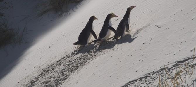 Pinguin-Porno und andere Tierbeobachtung